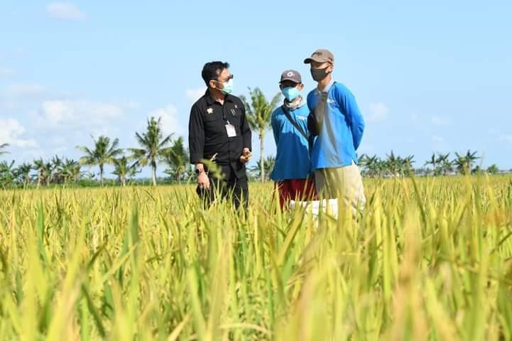 Abung Surakarta Kabupaten Lampung Utara, Provinsi Lampung, Lakukan pengembangan padi Gogo di
