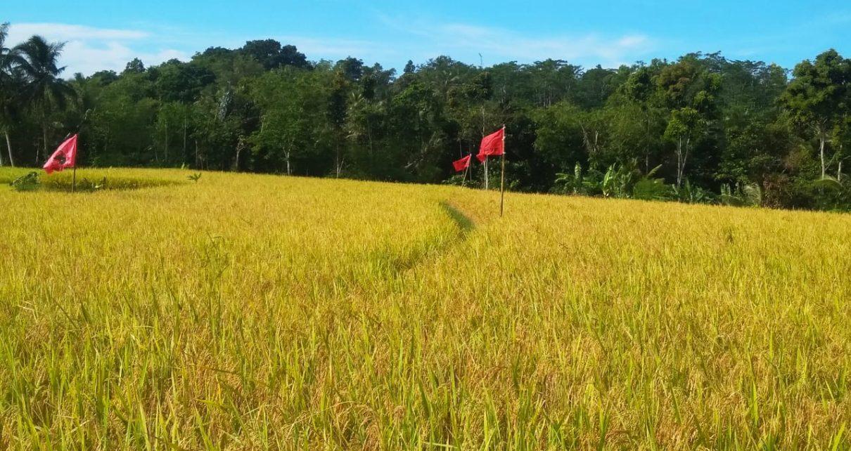 Bina Pemuda Petani Milanial, Anggota DPRD Sukabumi Anang Janur Spd. Kerjasamakan Lahan 3.5ha