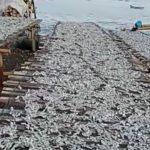 Nelayan PNTI Suhendi: Berkah Bulan Suci Ramadhan Hasil Tangkap Ikan Melimpah